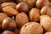 Mixed nuts with shells and selective focus — Stock fotografie