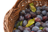 Wicker basket full of freshly collected purple plums — Stock Photo