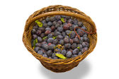Wicker basket full of freshly collected purple plums. — Stock Photo