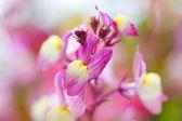 Wild flower pastel wonderland — Stock Photo