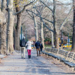 Classical Central park scenery — Stock Photo #50091919