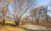 Cenário clássico de central park — Fotografia Stock