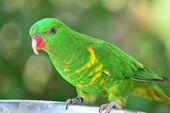 Parrot. — Stock Photo