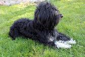 Cane sdraiato sull'erba — Foto Stock
