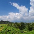 Постер, плакат: Farm land in Sumatera Indonesia