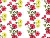 Watercolor petunia pattern — Stock Photo