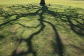 Ombre de l'arbre — Photo