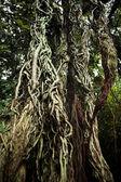 Shitogo Gajumaru-en Banyan Garden — Stock Photo