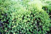 Tropical green bush  leaves — Stock Photo
