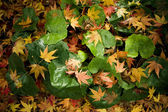 Group of colorful autumn leaves — Stock Photo