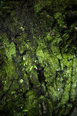 Seamless tree bark — Stock Photo