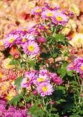 In one garden — Stock Photo
