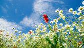 Bloem veld — Stockfoto