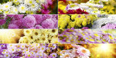 Flower backgrounds — Stockfoto