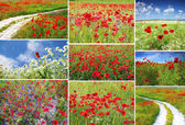 Poppy field collection — Stock Photo