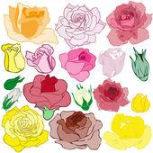 τριαντάφυλλα — Διανυσματικό Αρχείο
