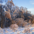 Forest after ice rain — Stock Photo #46549931