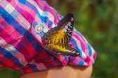 Butterfly sits on his sleeve. pink-and-blue pattern dress. — Stock Photo