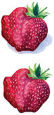 Big red strawberry on white background — Stock Vector