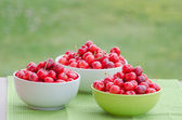 Juicy cherry on garden — 图库照片