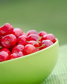 Juicy cherry on garden — Foto de Stock