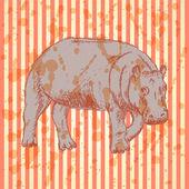 Sketch hippo, vector vintage background — Stock Vector