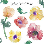 Watercolor Anemones. Watercolor Flowers. Spring Flowers — Stock Photo