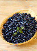 Bilberry, whortleberry  — Stock Photo