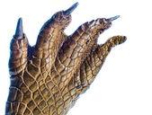Crocodile Paw — Stock Photo