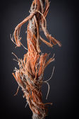 Frayed rope — Stock Photo