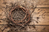 Empty nest  — Stock Photo