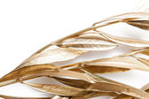 Golden branches — Stock Photo