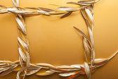 Gouden takken — Stockfoto
