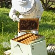 Beekeeper working in his apiary — Stock Photo #47170711
