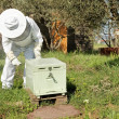 Beekeeper working in his apiary — Stock Photo #47170733