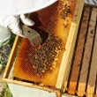 Beekeeper working in his apiary — Stock Photo #47170869
