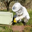 Beekeeper working in his apiary — Stock Photo #47170961