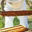 Beekeeper working in his apiary — Stock Photo #47171137