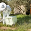 Beekeeper working in his apiary — Stock Photo