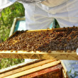 Beekeeper working in his apiary — Stock Photo #47171387