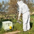 Beekeeper working in his apiary — Stock Photo #47171801
