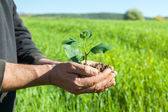 Farmer hands with plant — Stock Photo
