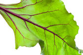 Beetroot leave — Stock Photo