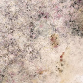 Old Moldy Cardboard Background — Stock Photo