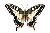 Butterfly Papilio machaon — Stock Photo