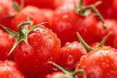Cherry tomatoes background. — Stock Photo