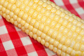 Corn on the cob macro on red tablecloth — Stock Photo