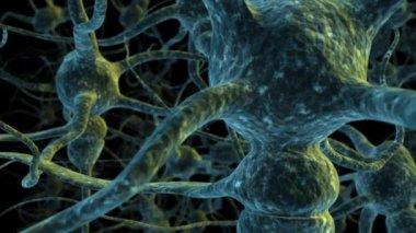 Neuron cells flight through — Stock Video