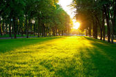 Lawn in the park — Stock Photo