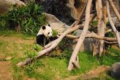 Orso Panda — Stock Photo